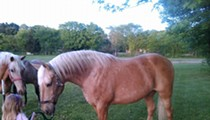 Have You Seen This Horse? Missouri Couple Begs for Clues
