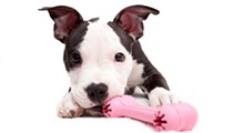 In Missouri, Pit Bulls Are Banned in 86 Municipalities. Dog Lovers Are Fighting Back