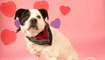 A Humane Society Puppy Could Visit Your Office on Valentine's Day