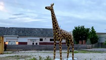 Civil Life's Stolen Giraffe Has Been Found! Thieves Still At Large