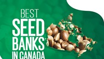 Where to Buy Cannabis Seed in Canada: The Best Canadian Seed Banks in 2021 (Marijuana Seeds Online in CA)