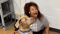 VIDEO: Humans Lose Hot Dog Contest Against St. Louis Shelter Dogs in Viral TikTok
