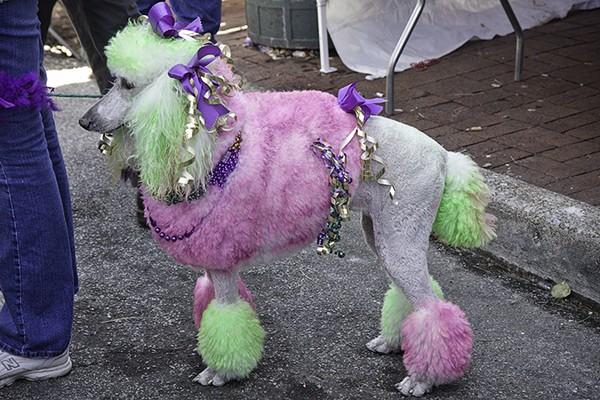 Barkus beggin parade pet strip