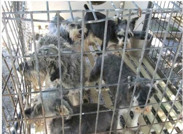 Missouri Has The Most Problem Puppy Mills In The Us Humane