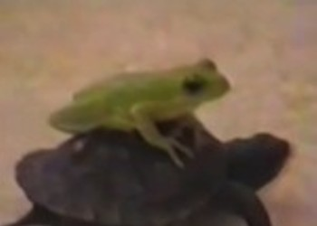 """This Is A Real YouTube Genre: """"Riding Turtles With Rap Music"""""""