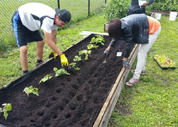Good Life Growing, an Organic Farm, Takes Root in North St. Louis