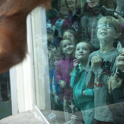 Saint Louis Zoo Party for Baby Orangutan 'Ginger'