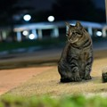 Feral Cats Have Colonized a South County Nursing Home. Neighbors Are Pissed