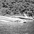 Ozark Water Daredevils