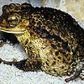 Frog-gone It!
