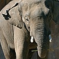 Party Time, Elephant