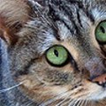 Meow, Meow, Meow, Meow