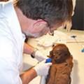 Crack the Mummy Case