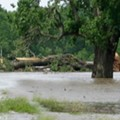 Missouri State Champion Tree, Second Largest In State, Destroyed By Tornadoes (PHOTOS)