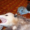 Taxidermy: It's an Art. And It's All Over St. Charles This Week