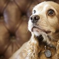 Dog Breeder's Violations Festered For a Year, New Report Shows