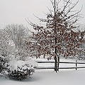Snow Job At Webster High