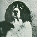 Jim the Wonder Dog Should be Missouri's Historical Dog