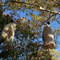 Saint Louis Zoo Accused of Racially Insensitive Halloween Decorations