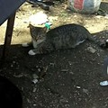 Rescuing the Pets and Stray Cats of Hopeville