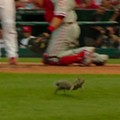 In Squirrel We Trust: Did Varmint Hex Phillies Pitcher?
