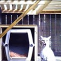 It's A Kitten! Belleville Bobcat Hit By Car Gives Birth in TreeHouse