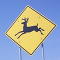 U.S. Deer Collision Map Curiously Similar to Red State, Blue State Divide