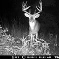 """Deer Harvest Down This Year Due to """"Freaky Weather"""""""