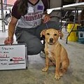 Joplin Humane Society Hosts an Adopt-a-thon for 600 Remaining Homeless Animals