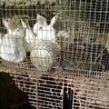 """Judge Orders Return Of 252 Animals: """"No Credible Evidence"""" of Abuse"""