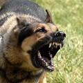 Attack Dog Training Bill Moves Closer to Passage