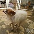 Humane Society: Missouri Still Has Nation's Worst Puppy Mills