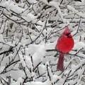 Update: Winter Weather Wreaking Havoc on Cardinals Opening Week