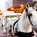 Downtown Carriage Horse Bites Tip Off Tourist's Finger