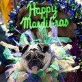 10 Dogs at the Mardi Gras Pet Parade That Do NOT Understand Why They're in Costume