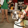 St. Louis Pet Expo 'Not Going to Occur Here,' Says St. Charles Family Arena