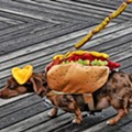 Pam's Chicago-Style Dogs vs. Audi-K's: The Chicago Dog Showdown!