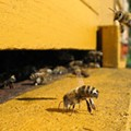 Zombies Latest Explanation for Colony Collapse Disorder