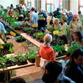 Saturday is Webster Groves Herb Society's Annual Herb Sale