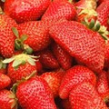 FoodWire: Thies Farm Strawberries Ready