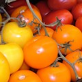 The Good, The Big & The Ugly Tomato Festival Saturday, July 31