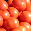 A Weekend for Tomatoes