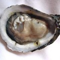 Oyster Day: The Oyster Porn Slideshow