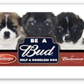 Be a Bud for Stray Rescue at Dierbergs