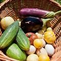 10 Local Urban Farms We Love
