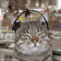 The Six Best Songs About Cats