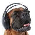 The Six Best Songs About Dogs