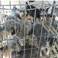 """Missouri Has the Most """"Problem Puppy Mills"""" in the U.S., Humane Society Says"""