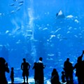 The New St. Louis Aquarium Is No Cause for Celebration