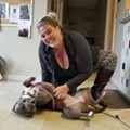 Humane Society Sent Dog to Home of Convicted Animal Abuser
